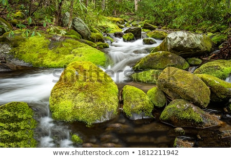 creek, moss and rocks Stock photo © Kayco