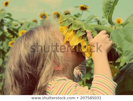 belo · criança · girassol · primavera · campo · flor - foto stock © mikko
