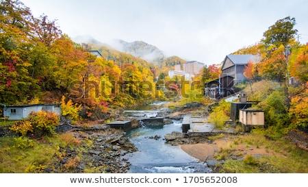 Krajobraz górskich strumienia lasu charakter zielone Zdjęcia stock © marekusz