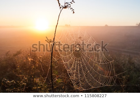 Rosa krople pajęczyna trawy górę Zdjęcia stock © Yongkiet