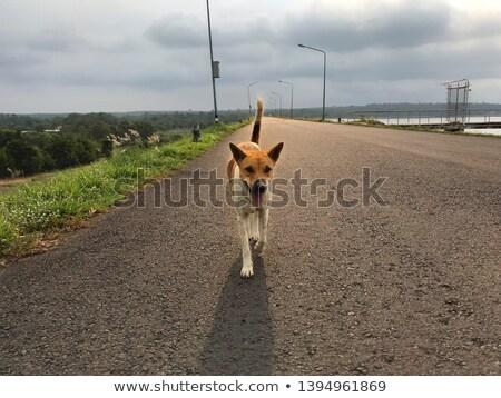 landscape background at road of barrage thailand stock photo © yanukit