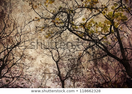 Artistic Barren Tree in Sepia Stock photo © ivanhor