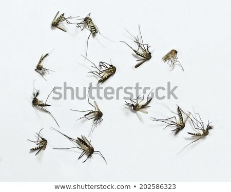 Foto d'archivio: Dead Mosquito Group Isolated On White Background