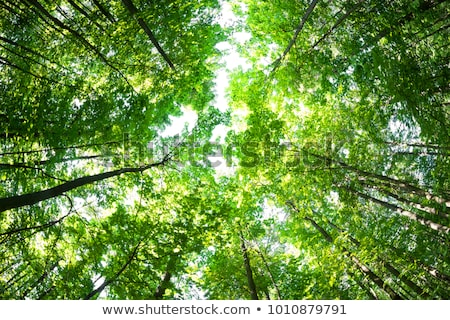 Large green forest with sunshine and blue sky Stock photo © Sportactive