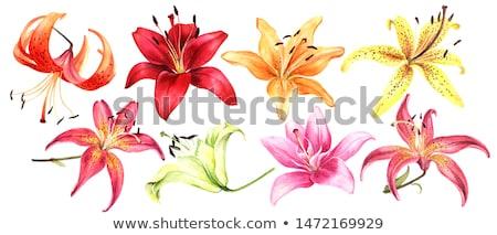 Geel lelie bloemen bloesem tuin bloem Stockfoto © saddako2