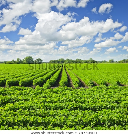 büyümüş · organik · çevre · sanayi · meyve · güvenli - stok fotoğraf © stevanovicigor