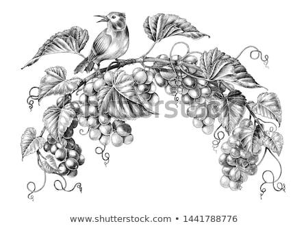 vintage · frame · wijn · druiven · glas · kunst - stockfoto © morphart