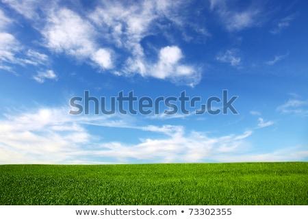 Orizzonte verde campo bella cielo blu nubi Foto d'archivio © stevanovicigor