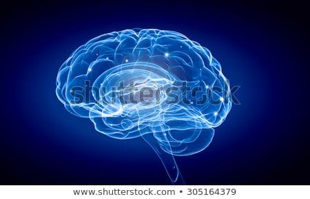 agy · fej · ötlet · orvosi · egészség · gyógyszer - stock fotó © lightsource
