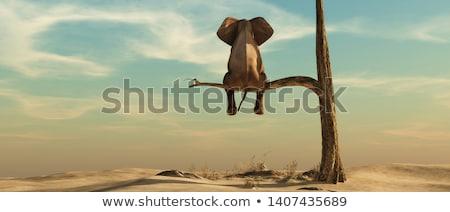 Doğal fil biçim nesne gibi ağaç Stok fotoğraf © Soleil