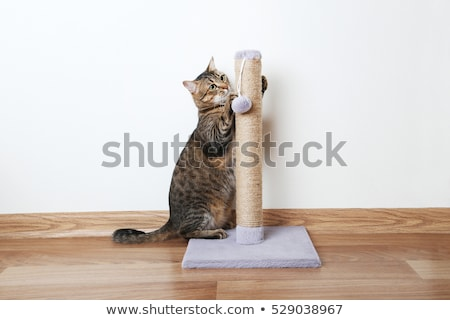 Cat scratching - Portrait stock photo © icemanj