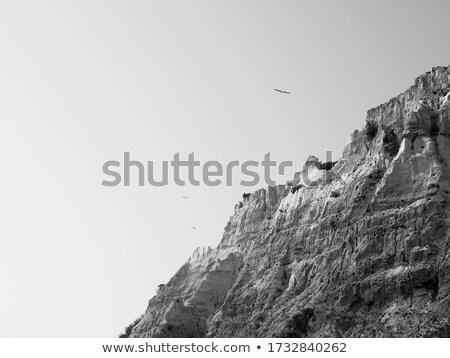 cabeça · gaivota · cara · oceano · azul · branco - foto stock © zhekos