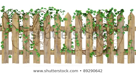 Stock photo: Fence design with wooden fence and vine