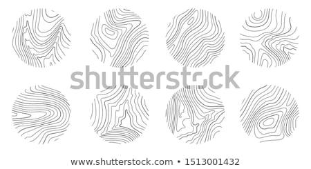 árvore · anéis · quadro · vetor · madeira - foto stock © day908
