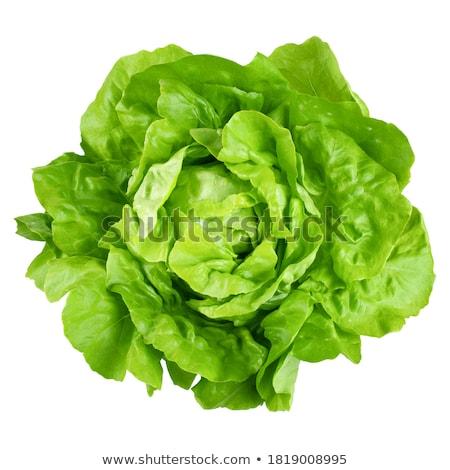 Vers sla groene continentaal gekruld voedsel Stockfoto © Digifoodstock