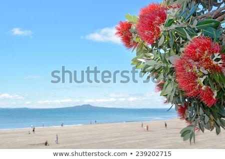 Vermelho praia norte novo hibisco costa Foto stock © oliverfoerstner