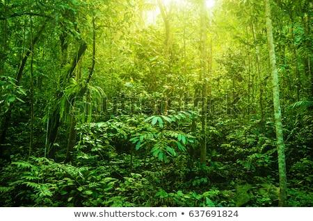 Deep in lush rainforest Stock photo © Juhku