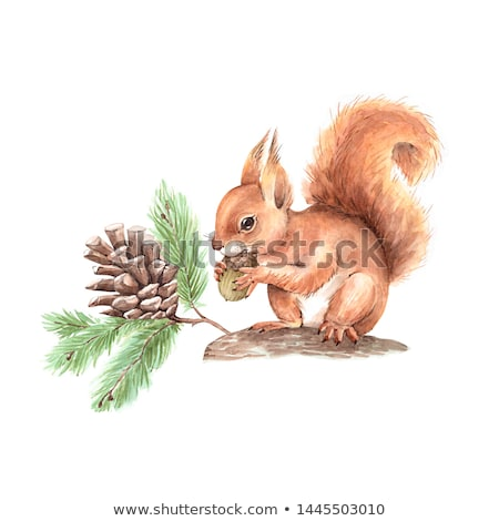 young squirrel on tree branch stock photo © juhku