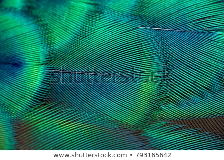 Abstraction with peacock feather Stock photo © blackmoon979