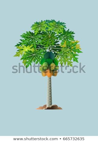 Ağaçlar tarla yeşil ağaç gıda meyve Stok fotoğraf © eh-point