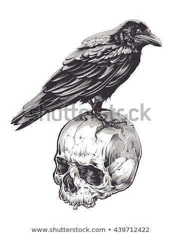 black bird with skull crow of death vector illustration stock photo © popaukropa