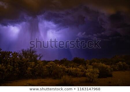 A storm hit the desert Stock photo © bluering