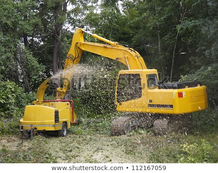 scene with trees being chopped stock photo © colematt