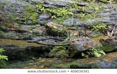 Nyugalmas vízesés idilli kék hegyek rövid Stock fotó © lovleah
