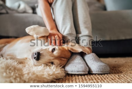 Hand caressing dog Stock photo © simply