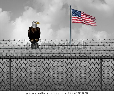 american eagle on security border stock photo © lightsource