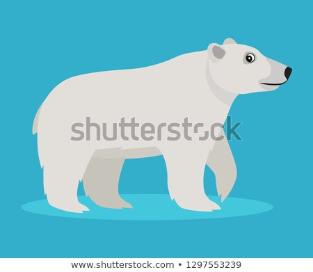 Cute big polar white bear icon, isolated on blue background, big furry beast, vector illustration in Stock photo © MarySan