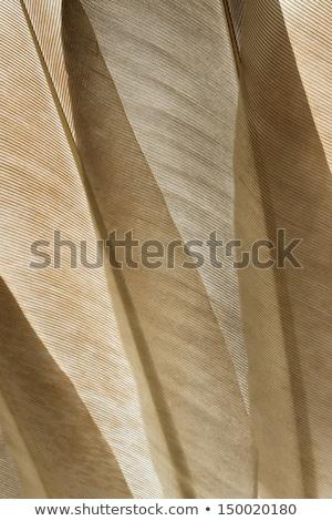 Doves close up Stock photo © Givaga