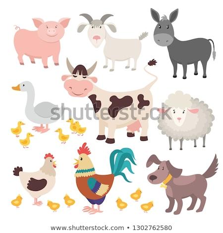 Geit vector grappig dier geïsoleerd cartoon Stockfoto © pikepicture