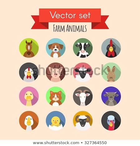 Farm animals flat icons set. Vector head. Stock photo © nosik