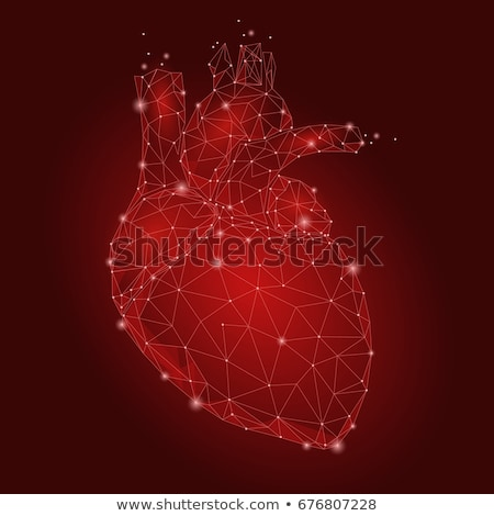 Coeur anatomie humaine diagramme saine Photo stock © Lightsource