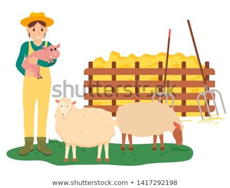 Kobieta wieprzowych owiec gospodarstwa Zdjęcia stock © robuart