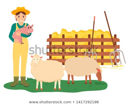 Zdjęcia stock: Farming Woman Holding Pig By Sheep Farm Vector