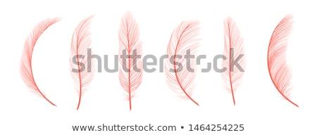 色 装飾的な 鳥 羽毛 ヴィンテージ ストックフォト © pikepicture