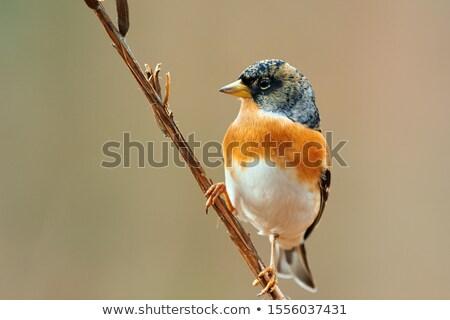 Pássaro galho árvore pena animal Foto stock © manfredxy