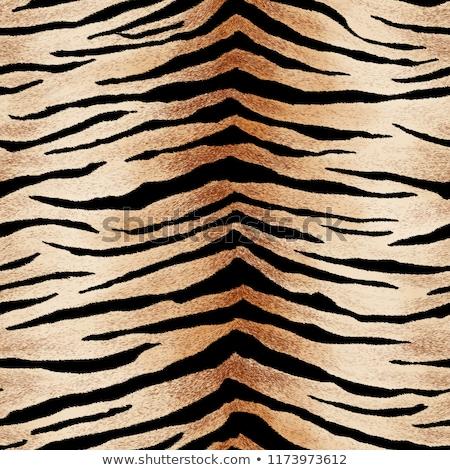 Bianco nero tigre pelle dettagliato natura Foto d'archivio © evgeny89