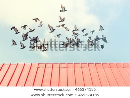old bulding and flying pigeons Stock photo © caimacanul