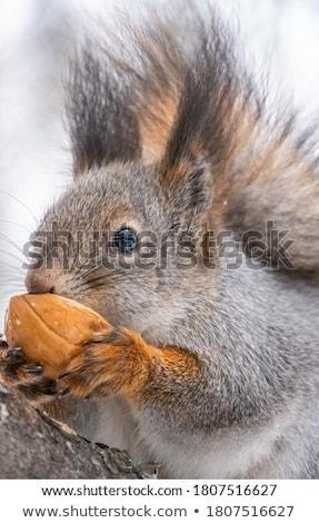 Najaar portret prachtig brunette kiekeboe vallen Stockfoto © lithian