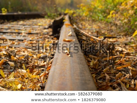 Autumn road with fallen rusty leaves Stock photo © lightkeeper