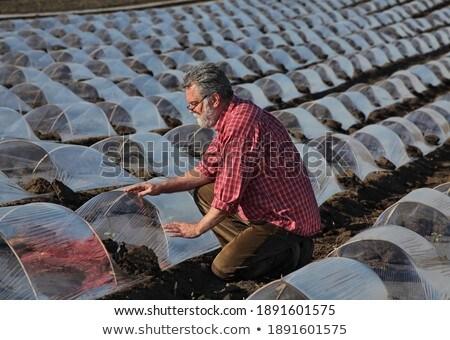фермер дыня области качество Сток-фото © simazoran
