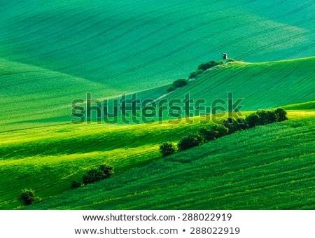 Moravian rolling landscape with shack Stock photo © dmitry_rukhlenko