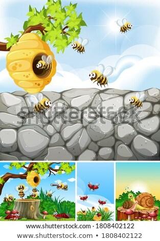 Szett különböző rovarok élet kert illusztráció Stock fotó © bluering