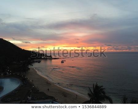 turtledove at sunset Stock photo © taviphoto