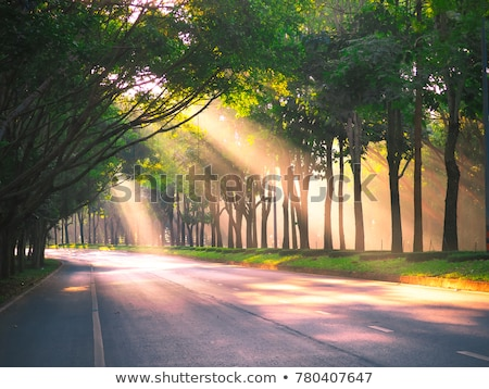 Yaz manzara yol tek başına ağaç gökyüzü Stok fotoğraf © taden