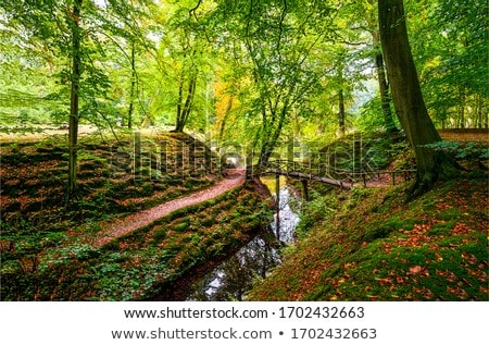 creek in the forest stock photo © kayco