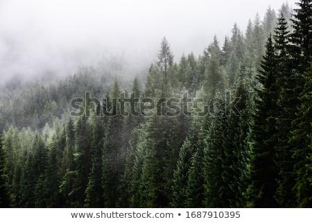 Wystroić mgły jesienią krajobraz samotny przeciwmgielne Zdjęcia stock © Kotenko